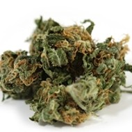 Patient files claim for confiscated pot