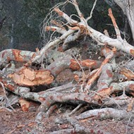 Uprooted: Neighbors say a landowner in rural A.G. has been destroying nature and causing problems
