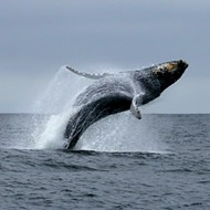 Whale-watching tour at Morro Bay