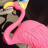 Get flocking: Prank-centric pink flamingo fundraiser benefits GALA building