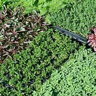 Feel-good gardening: Growing Grounds Farm <p></p>nurtures plants and good spirits