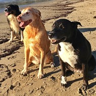 Doggone: Will dogs be banned from Port San Luis beaches?