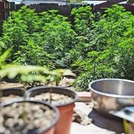 Grover Beach gives the 'green light' to marijuana industry