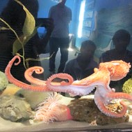 A sea education: Central Coast Aquarium welcomes new executive director, continues mission to teach community about marine life