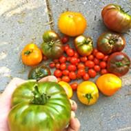 Taste 30-plus heirloom tomato varieties at Windrose Farm on Sept. 22