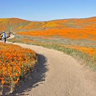 A trip to Southern California's infamous poppy preserve really puts people into perspective
