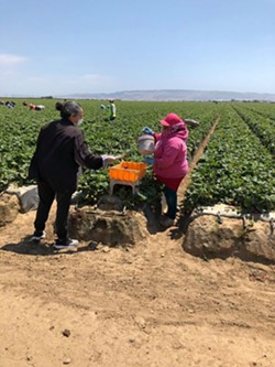 TIES TO COMMUNITY Family Service Agency, which gave out masks to agricultural employees in June, will now provide wellness checks and other support services to Santa Barbara County farmworkers through the state's Housing for the Harvest program. - PHOTO COURTESY OF FAMILY SERVICE AGENCY FACEBOOK