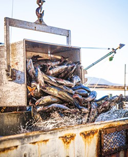 OUT OF WATER Dungeness crab fishing season started more than a month late at the end of 2020 due to new state regulations brought about by whale entanglements. - PHOTO BY JAYSON MELLOM