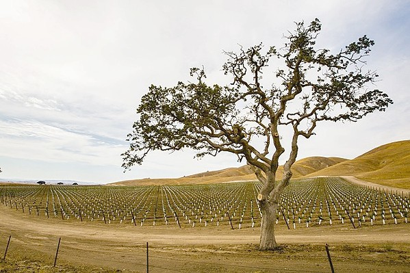JUST OR UNJUST? The Board of Supervisors wants a new Paso Robles groundwater policy, which would affect pumping for 40 percent of the county's ag economy. - FILE PHOTO BY TOM FALCONER