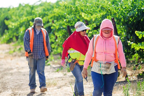 ESSENTIALLY NOT HELPED The pandemic continues to affect farmworkers throughout California, including the Central Coast, as the population experiences job loss, heightened fears of contracting the virus, and economic burdens. - FILE PHOTO BY JAYSON MELLOM