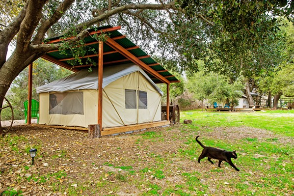 GLAMPING HEAVEN Branch Mill Organic Farms outside Arroyo Grande offers two tarp tent campsites, complete with beds, bathrooms, showers, and an outdoor kitchen. - PHOTO BY JAYSON MELLOM