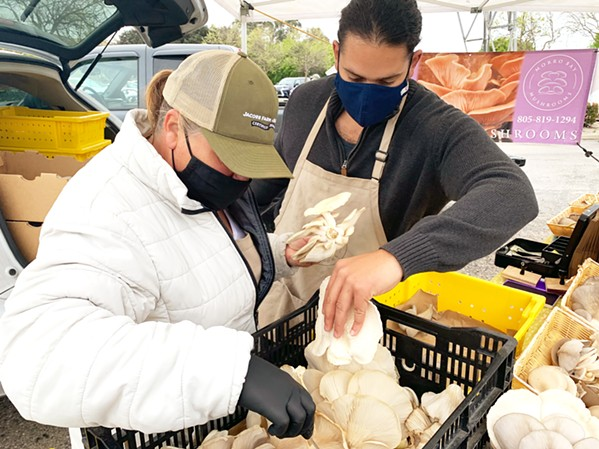 SOLD Cleaning and packing a variety of oyster mushrooms, Rosa Zunino and her intern Nico Saiz get mushrooms ready for a restaurant customer on April 3. - PHOTO BY CAMILLIA LANHAM