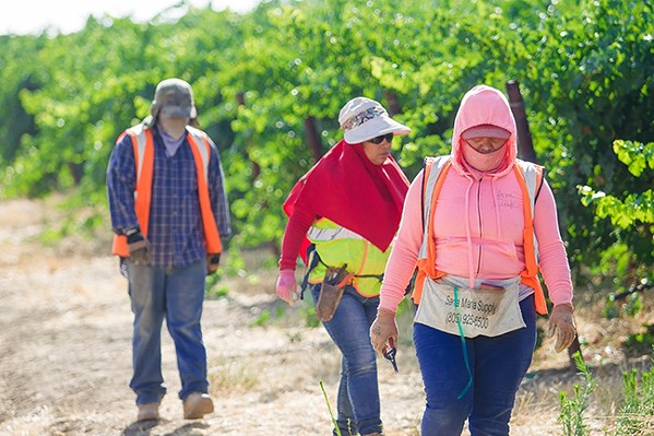 CREATING COMPROMISE The Farm Workforce Modernization Act, which passed the House of Representatives, aims to stabilize the ag labor force and update the current H-2A program. - FILE PHOTO BY JAYSON MELLOM