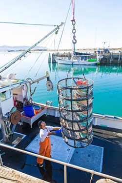 END OF SEASON The California Department of Fish and Wildlife called an end to the Dungeness crab fishing season four weeks early to prevent potential whale entanglement. - FILE PHOTO BY JAYSON MELLOM