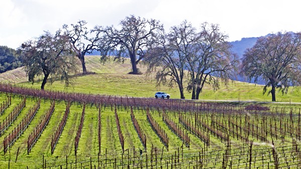 DECLINES San Luis Obispo County's 2020 crop report shows that wine grapes decreased in value compared to 2020. - FILE PHOTO BY JAYSON MELLOM