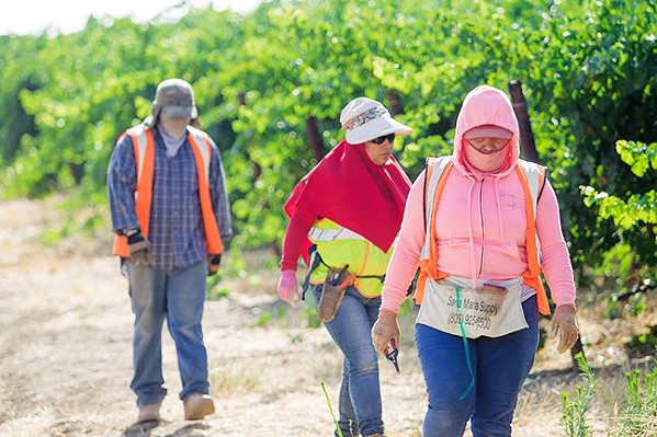 MORE HOUSING The largest farmworker housing project in recent SLO County history was approved on Sept. 17. It plans to house up to 240 field laborers on Harvard-owned vineyards in Shandon. - FILE PHOTO BY JAYSON MELLOM