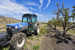 LAND SAVED:  Cal Poly is taking possible development of some of its on-campus agriculture land out of its proposed master plan, thanks to the efforts of concerned students and faculty. - FILE PHOTO BY KAORI FUNAHASHI