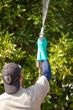 BUG SPRAY:  The California Department of Food and Agriculture has been conducting eradication efforts for the Asian citrus psyllid, an invasive insect that can transmit a disease deadly to citrus trees. - PHOTO BY KAORI FUNAHASHI