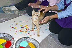 A FELINE PICASSO :  One of the Woods Humane Society wards participates in a painting session. - PHOTO BY MIMI DITCHIE