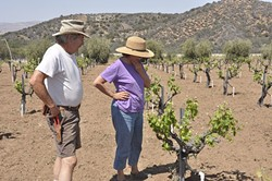 COUPLE'S HOPE:  Stephen Gliessman and Roberta Jaffe inspect the growth of their spring vines. They would like the world to rethink the way it relates to agriculture and be more cognizant of how resources are used in farming - PHOTO BY CAMILLIA LANHAM