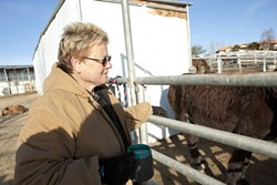 HORSE HERO :  Susan Schwartz was diagnosed with cancer in November and spent the next month frantically searching for someone who could help run her horse shelter while she undergoes treatment. A caretaker recently stepped up to the task but wishes to remain anonymous. - FILE PHOTO BY STEVE E. MILLER