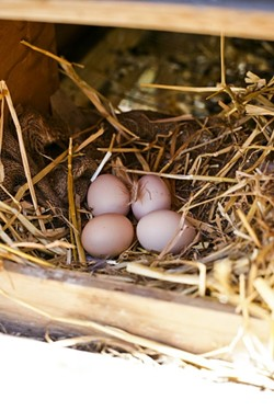 FRESH EGGS:  George and Liz get about three eggs a day in the summer months. - PHOTO BY GLEN STARKEY