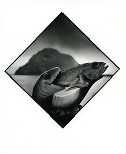 UNDER THE BLACKLIGHT:  Here, Cambria resident Arthur Tress photographs one fish eating another fish in one of the 100 images chosen for his new exhibit on scenes surrounding Morro Rock. - PHOTO BY ARTHUR TRESS