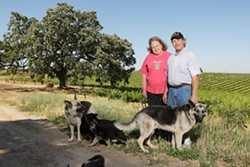 HARVEST HOUNDS :  Doce Robles Winery owners Maribeth and Jimmy Jacobsen are justifiably famous for their sumptuous red varietals, and their lovable constant companions. - PHOTO BY STEVE E. MILLER