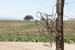 MIND THE GAP:  A countywide program that would continue limitations for new and increased groundwater use for agricultural irrigation was stalled by the SLO County Board of Supervisors. A vineyard east of San Miguel owned by J. Lohr received a vested rights exemption to plant the vineyard after the passage of the urgency ordinance in August 2013. - FILE PHOTO BY TOM FALCONER