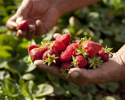 cuisine-berries-5-230.jpg