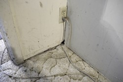 RATS :  Leaking ceilings aren't the only problem for one local family stuck in a rundown rental home. The rain also drives rats to gnaw through the walls. - PHOTO BY STEVE E. MILLER