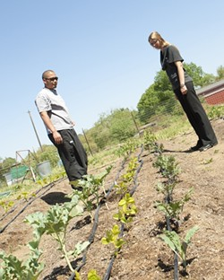 INSPECTION :  Chris and Shandi Kobayashi inspect their small four-row farm that actually produces more vegetables than their restaurant Artisan can use. - PHOTO BY STEVE E. MILLER