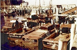 BYGONE DAYS:  A fleet of black-and-red boats based in Morro Bay carried a plentiful abalone harvest five decades ago. - PHOTO COURTESY OF STEVE REBUCK