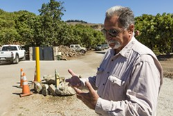 MAN WITH A PLAN:  General Manager at Morro Creek Ranch, Alan Cavaletto, discusses his plan to cut water usage by stumping the majority of their avocado trees. - PHOTO BY HENRY BRUINGTON