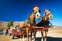 ADVENTURE TIME:  Check out a real working stage coach at Harris Stage Lines in Paso Robles (pictured), romp through Hearst Castle, or take a ride on a fishing kayak in Morro Bay during SAVOR's annual lineup of Adventure Tours. - PHOTO COURTESY OF VISIT SLO