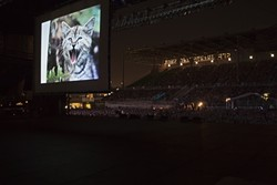 CAT PEOPLE UNITE:  The first Internet Cat Video Festival was held outdoors at the Walker Art Center in Minneapolis (pictured). It drew more than 10,000 entries—and as many viewers. - PHOTO COURTESY OF THE WALKER ART CENTER