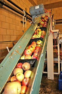 APPLE HARVEST:  Heirloom apples sourced from Trees of Antiquity in Sebastopol, Calif., make the trip from orchard to beverage at Bristols Ciderhouse in Atascadero during a Sunset SAVOR Adventure Tour in late September. - PHOTO BY HAYLEY THOMAS