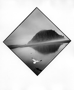 UNEARTHING THE ROCK:  Since 2009, Tress has been taking daily photographs of the local flora, fauna, and people of Morro Bay. SLOMA chose 100 out of nearly 25,000 images taken by Tress. - PHOTO BY ARTHUR TRESS