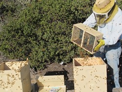 HIVE MIND: :  Wade Johnston, head beekeeper for TheraBee, is a former engineer who one day decided to focus on helping bees, people, and the planet. - PHOTO BY MARTHA VAN INWEGEN