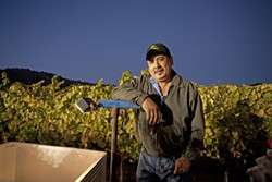VIENTE SIETE ANOS :  Rigo Castillo has been working for Laetitia for 27 years. This evening, he's driving a harvest tractor that takes the grapes back for processing. - PHOTOS BY STEVE E. MILLER
