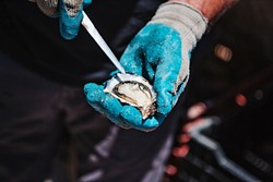 AQUA ADVENTURE:  This sumptuous, salty oyster was thoroughly enjoyed on a dock in the middle of Morro Bay estuary last summer, courtesy of Morro Bay Oyster Company owner Neal Maloney. - PHOTO BY HAYLEY THOMAS