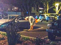 WINNER WINNER CHICKEN DINNER:  Out of the shadows of Heritage Oaks Bank, a man emerged in a chicken costume carrying some balloons. Just your average Friday night. - PHOTO BY JESSICA PEÑA