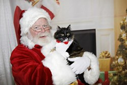 MEOWY CHRISTMAS:  Two years ago Cat Cat sat on Santa's lap at Woods Humane Society and requested a lifetime supply of catnip for Christmas. - PHOTO COURTESY OF ASHLEY SCHWELLENBACH