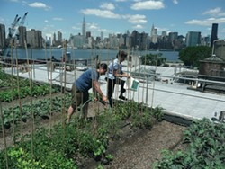 """ROOFTOP GARDENERS :  German documentary filmmaker Valentin Thurn chronicles the horrifying amount of wasted food across the globe in Taste the Waste, part of the festival's new Screen Cuisine category. """"We went around the world not to show where the waste piles are higher,"""" Thurn explained to New Times. """"The reason was rather to show solutions."""" Pictured are urban gardeners in New York City. - PHOTO COURTESY OF VALENTIN THURN"""