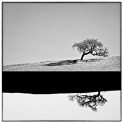 """TREE TIME:  Third place-winner James Crawford actually used two trees to make this composite image, """"Yin Yang Gone Wrong."""" - IMAGE BY JAMES CRAWFORD"""