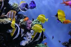 ab-tropical_fish0.jpg