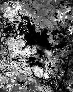"""HOLE IN THE SKY� FIRST PLACE FLORA - BW: - ERIC MEADER"