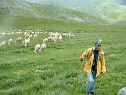 BAA BAA :  Sheep roam in the pristine countryside near the town of Gostivar.