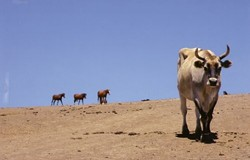 """""""HOME ON THE RANGE� FIRST PLACE ANIMALS - COLOR: - LYNDA ROELLER"""
