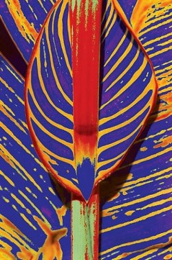 """CANNA POP ART� THIRD PLACE ABSTRACT - COLOR: - TERESE MARIE"